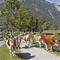 Tyrolean Treats